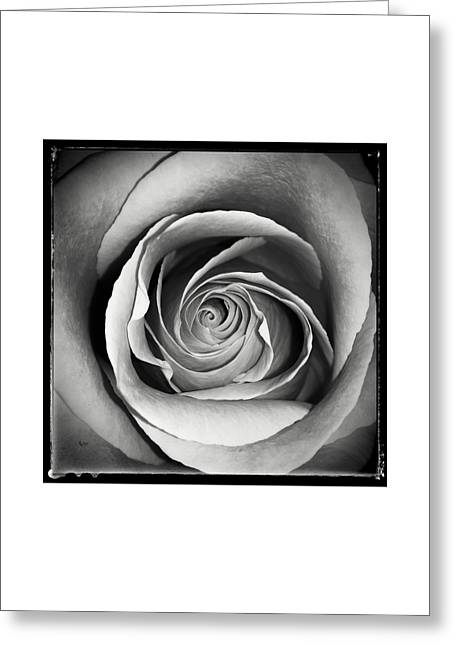 Old Rose Greeting Card