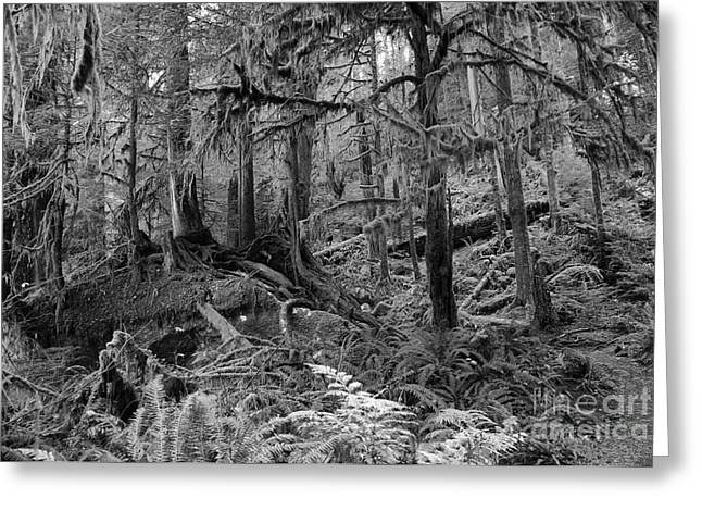 Greeting Card featuring the photograph Olympic Rainforest by Jeni Gray