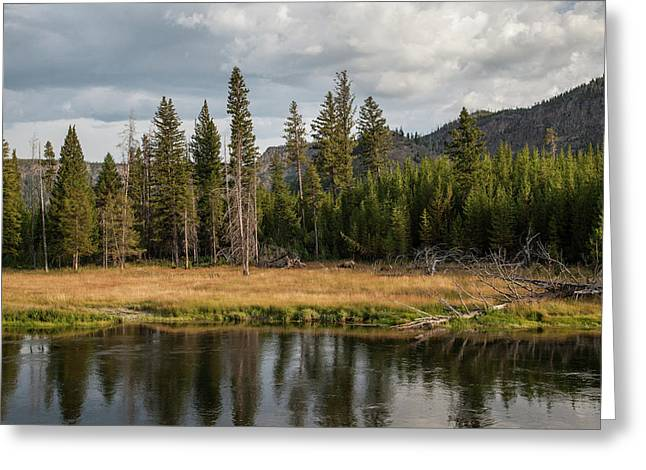 Greeting Card featuring the photograph On The Banks Of The Madison River by Lon Dittrick