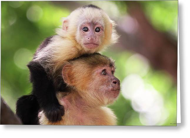 One Of Those Days When You Just Can't Seem To Get The Monkey Off Your Back Greeting Card