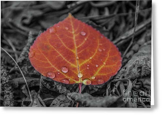 Orange Aspen Leaf Greeting Card