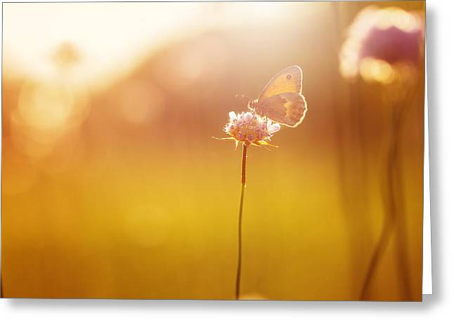 Orange Butterfly Seating On Wild Pink Greeting Card