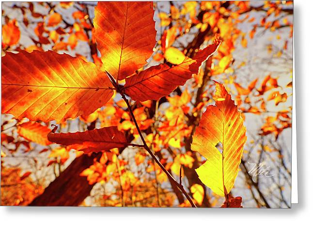 Orange Fall Leaves Greeting Card