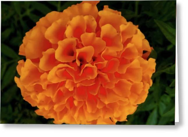 Orange Flowers No. O15 Greeting Card