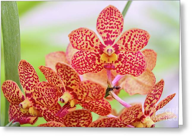 Orange Spotted Orchids Greeting Card