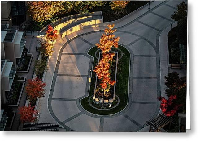 Orange Trees In Autumn Greeting Card
