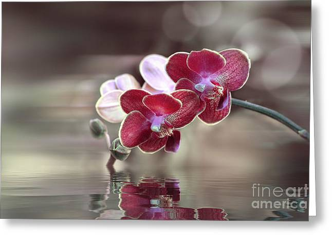Orchid Reflection Greeting Card