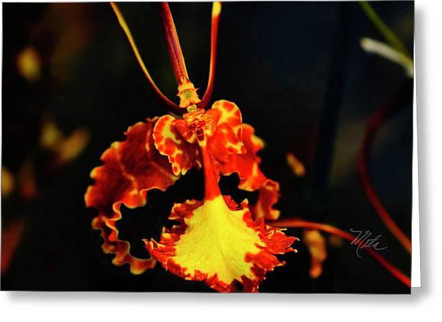 Orchid Study Four Greeting Card
