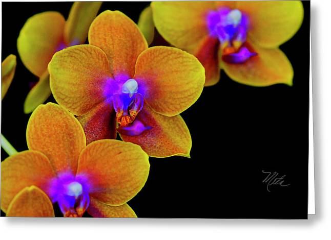 Orchid Study Ten Greeting Card