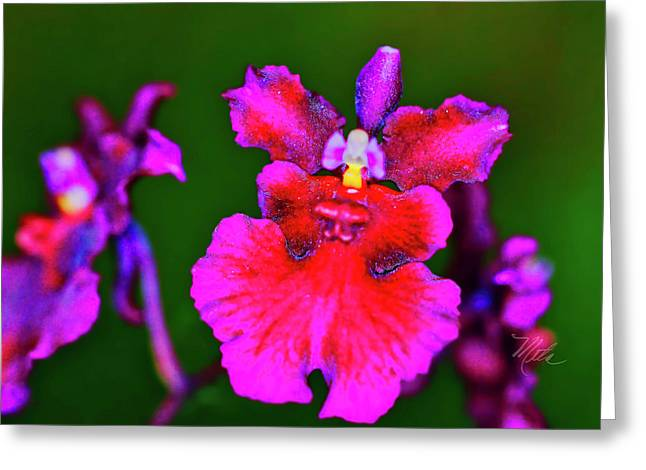 Orchid Study Three Greeting Card