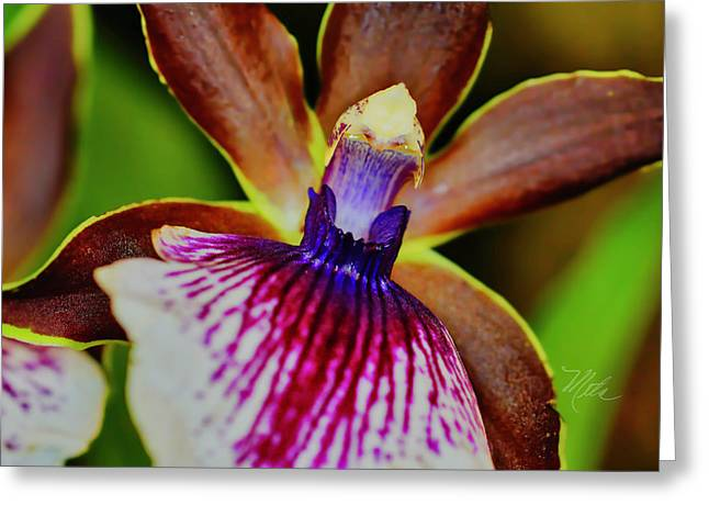 Orchid Study Two Greeting Card