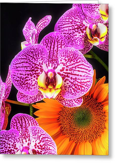 Orchids And Sunflower Greeting Card