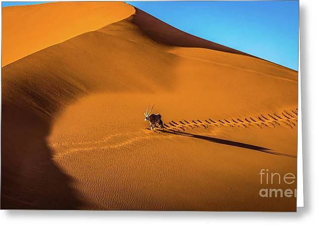Oryx Crossing Big Daddy Dune, Sossusvlei, Namibia Greeting Card