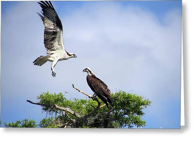 Ospreys At Blue Cypress Lake Greeting Card