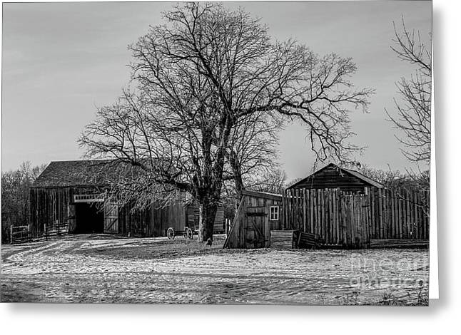 Out In The Barn Yard Greeting Card