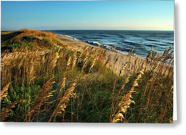 Outer Banks View Greeting Card by Dan Carmichael