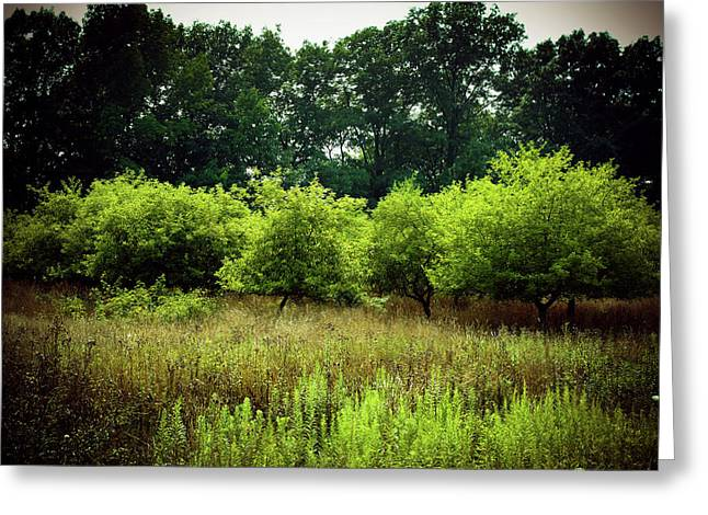 Greeting Card featuring the photograph Overgrown by Michelle Wermuth