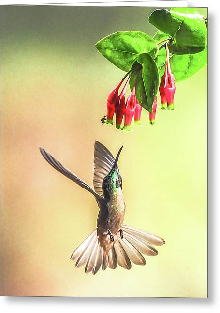 Overhead Greeting Card