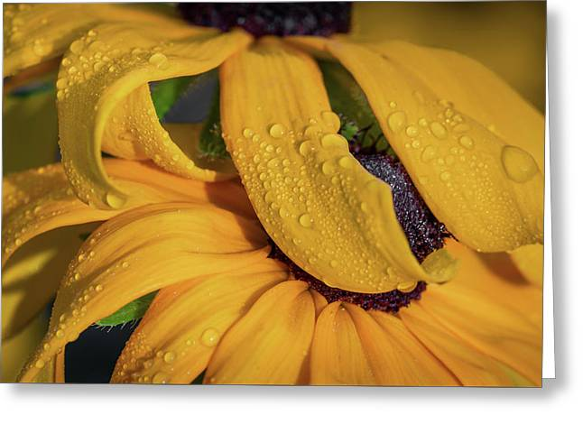Greeting Card featuring the photograph Overshadowing by Dale Kincaid