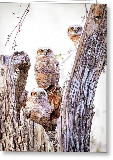 Owl Trio Standing Guard Greeting Card