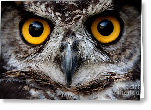 Owls Are The Order Strigiformes Greeting Card