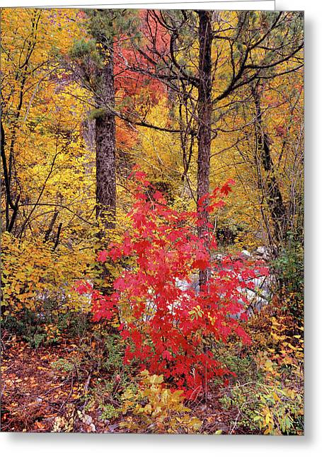 Painted Forest Greeting Card by Leland D Howard