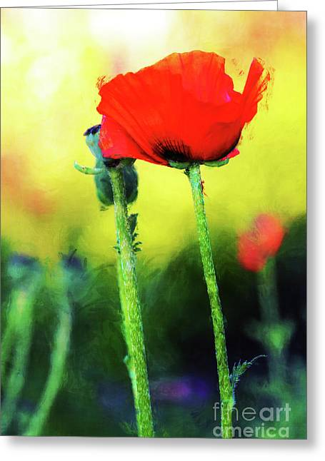 Painted Poppy Abstract Greeting Card
