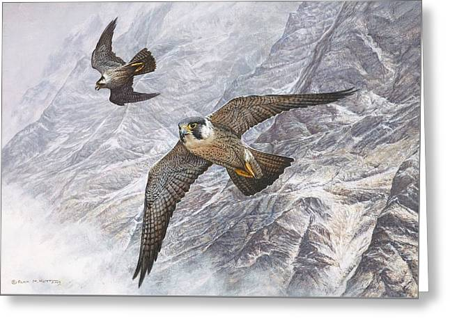 Greeting Card featuring the painting Pair Of Peregrine Falcons In Flight by Alan M Hunt