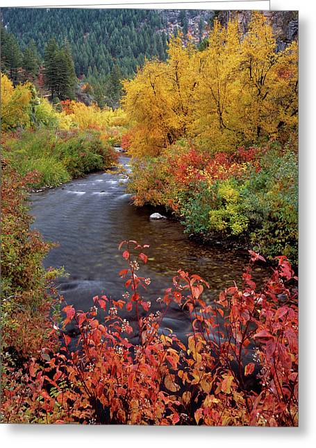 Palisades Creek Canyon Autumn Greeting Card by Leland D Howard