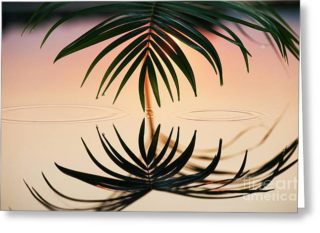 Palm Light Reflection Greeting Card by Tim Gainey