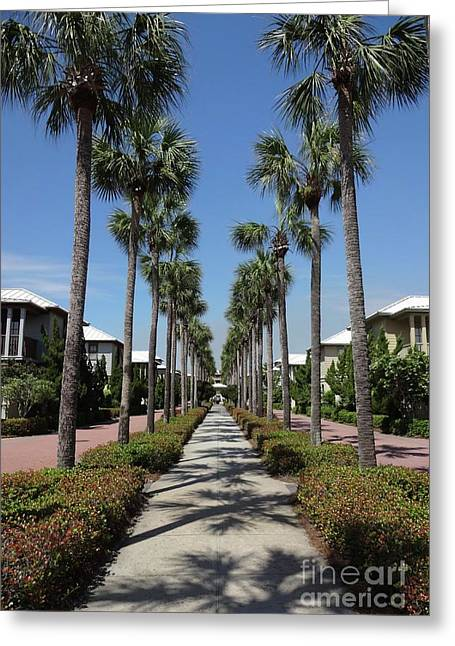 Palm Lined Pathway Greeting Card