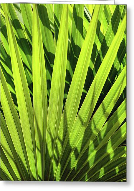 Greeting Card featuring the photograph Palm Portrait I by Leda Robertson