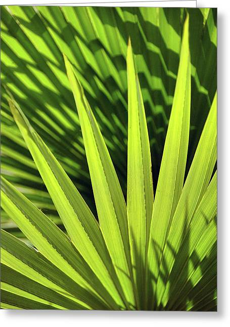 Greeting Card featuring the photograph Palm Portrait II by Leda Robertson