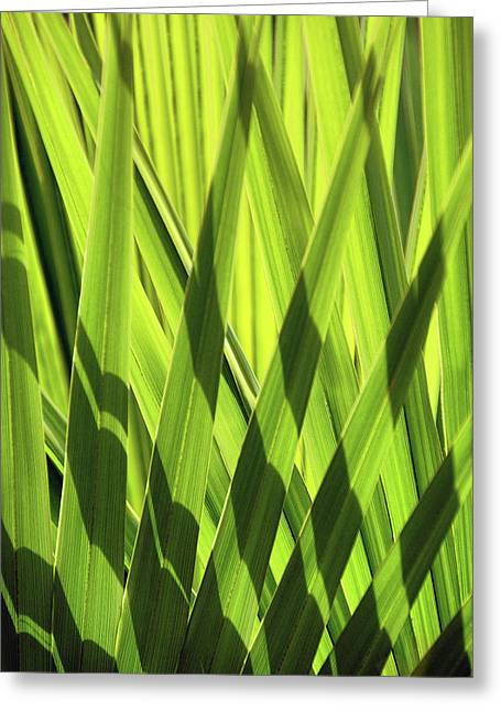 Greeting Card featuring the photograph Palm Portrait IIi by Leda Robertson