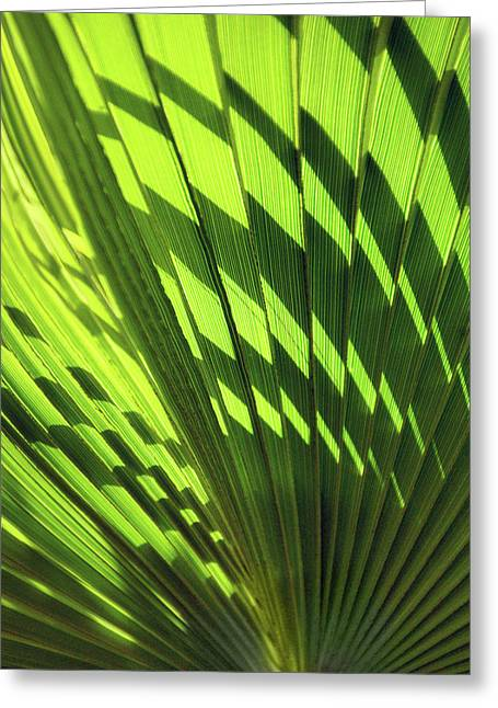 Greeting Card featuring the photograph Palm Portrait Iv by Leda Robertson