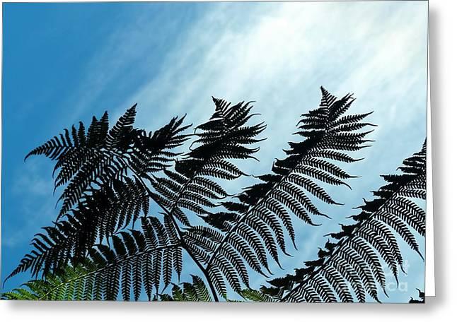 Palms Flying High Greeting Card