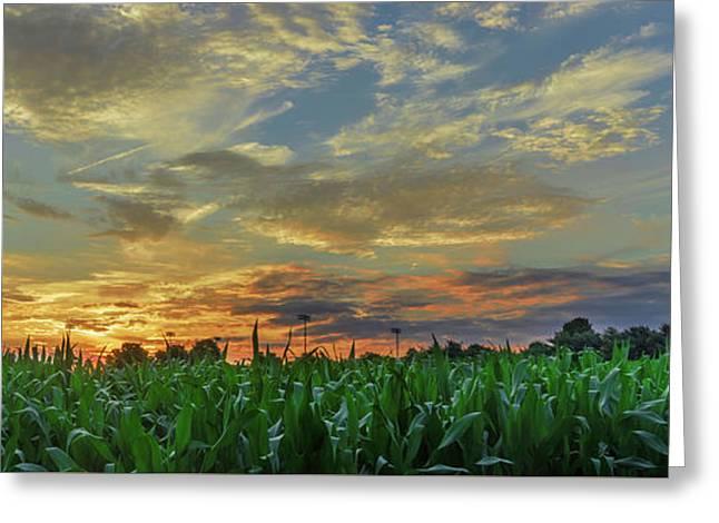 Panoramic Cornfield Sunset Greeting Card