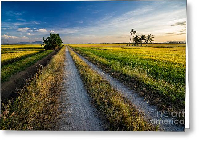 Panoramic View Of Paddy View During Greeting Card