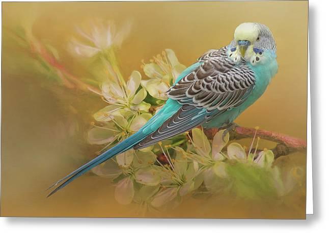 Parakeet Sitting On A Limb Greeting Card