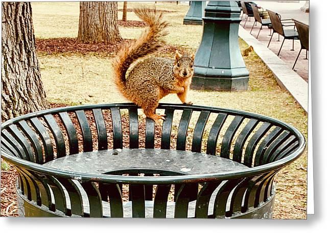 Park Squirrels Greeting Card