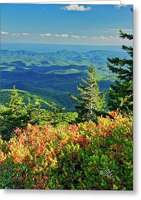 Parkway Tree Greeting Card