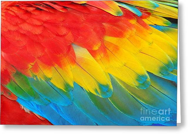 Parrot Feathers, Red And Blue Exotic Greeting Card