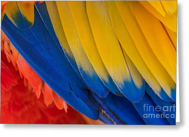 Parrot. Multi-colored Feathers. Macaw Greeting Card