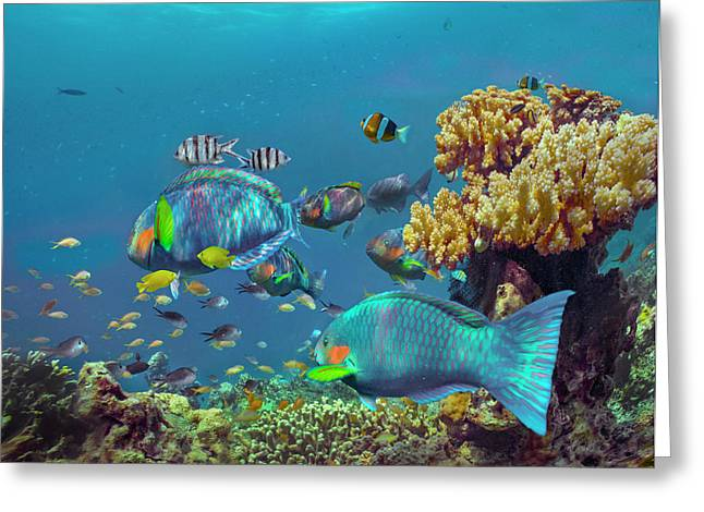 Parrotfish, Anemonefish, And Sergeant Greeting Card