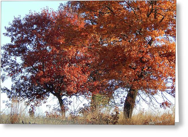 Passing Autumn Greeting Card