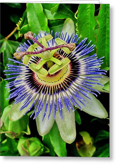 Passion Flower Bee Delight Greeting Card