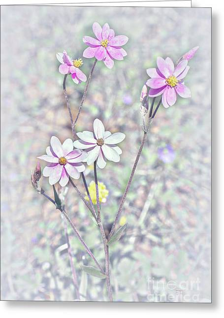Greeting Card featuring the photograph Pastel Paper Daisies by Elaine Teague