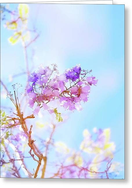 Pastels In The Sky Greeting Card