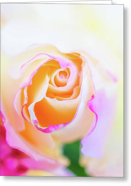 Pastels Greeting Card