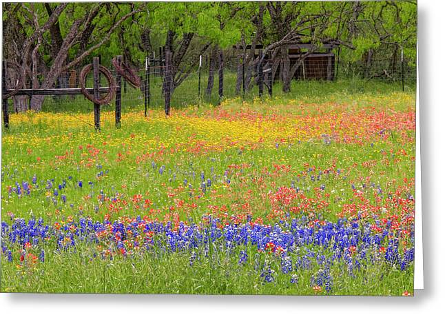 Pattern Of Texas Paintbrush Greeting Card by Adam Jones